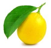Zitrone mit dem Blatt lokalisiert auf Weiß Stockfotografie