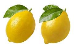 Zitrone mit dem Blattsatz lokalisiert auf Weiß lizenzfreies stockbild