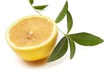 Zitrone mit grünem Blatt lizenzfreie stockfotografie