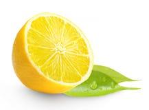 Zitrone mit grünem Blatt Stockfoto