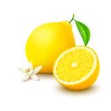 Zitrone mit Hälfte und Blume auf weißem Hintergrund Stockbilder