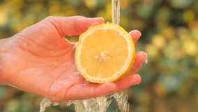 Zitrone nah oben an einem sonnigen Tag stock video