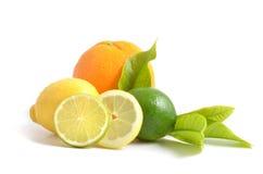 Zitrone, Orange und Kalk Stockbild