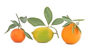 Zitrone, Tangerine und Orange Lizenzfreies Stockfoto