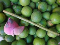 Zitrone und Lotos Stockfotografie