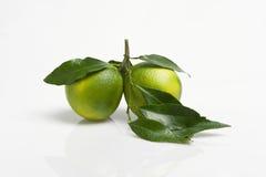 Zitrone und Orange Lizenzfreies Stockfoto