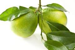 Zitrone und Orange Stockbilder