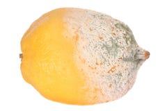 Zitronefrucht Hälfte-beschädigt Stockbild