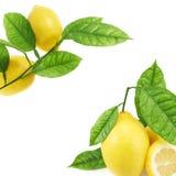 Zitronen über dem weißen Hintergrund Lizenzfreies Stockfoto