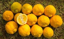 Zitronen-Anzeige Stockbild