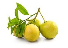 Zitronen-Frucht Lizenzfreies Stockbild