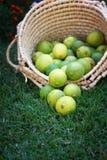 Zitronen im Korb Stockfotos