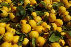 Zitronen am Markt Lizenzfreie Stockfotos