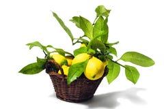 Zitronen mit Blättern Lizenzfreies Stockfoto