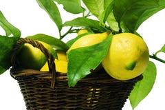Zitronen mit Blättern Lizenzfreie Stockfotografie