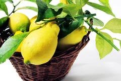 Zitronen mit Blättern Lizenzfreies Stockbild