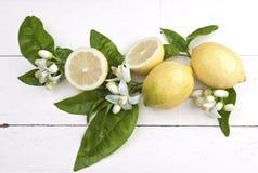 Zitronen mit Blüten Stockbild