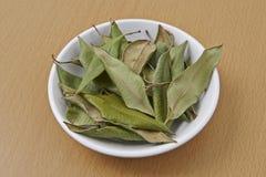 Zitronen-Myrte getrocknete Blätter lizenzfreie stockfotos