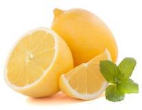 Zitronen- oder ZitronenZitrusfrucht Lizenzfreie Stockfotografie