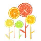 Zitronen- Scheibeblumen stock abbildung
