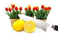 Zitronen-Tulpe Stockfotos
