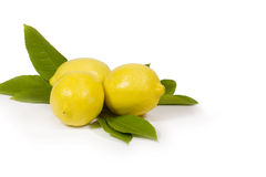 Zitronen u. Blätter   stockbilder