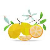 Zitronen und Blumen auf weißem Feld Stockfotos