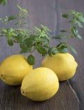 Zitronen und eine Niederlassung der Minze Lizenzfreie Stockbilder