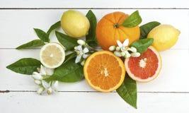 Zitronen und Orangen Lizenzfreies Stockfoto
