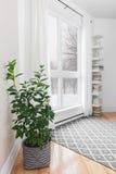 Zitronenbaum in einem Raum mit ruhiger Ansicht Stockbilder