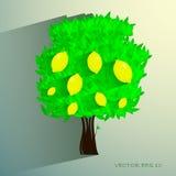 Zitronenbaum lokalisiert auf weißem Hintergrund Vektor Lizenzfreies Stockfoto