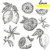 Zitronenfrüchte eingestellt Stockfotografie