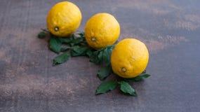 Zitronengelb Lizenzfreies Stockbild