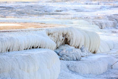 Zitronengelber Frühling, Yellowstone Lizenzfreie Stockfotos