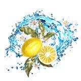 Zitronenscheiben und -blumen mit Wasserspritzen Aquarellillustration auf weißem Hintergrund stock abbildung