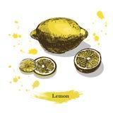 Zitronenskizze Gezeichnete Zitrone der Weinlesetinte Hand, lokalisiert auf weißem Hintergrund Stockfotografie