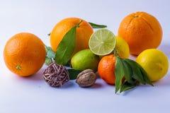 zitrusfrucht Lizenzfreie Stockfotos