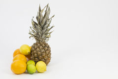 Zitrusfrucht-Anordnungs-Landschaft lizenzfreie stockfotos