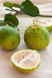 Zitrusfrucht aurantium Linn, saure Orange oder Pomeranze Lizenzfreies Stockfoto