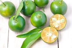 Zitrusfrucht Calamondin Lizenzfreie Stockfotografie