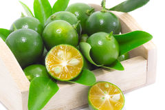 Zitrusfrucht Calamondin Lizenzfreies Stockbild