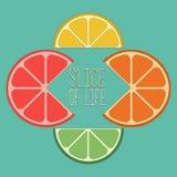 Zitrusfrucht geschnittene Mischung Lizenzfreie Stockfotografie