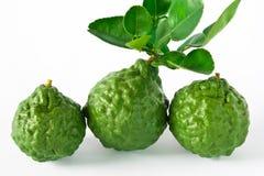 Zitrusfrucht hystrix Stockbilder