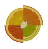 Zitrusfrucht-Melodie Lizenzfreies Stockfoto