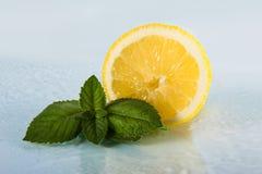 Zitrusfrucht mit tadellosen Blättern Lizenzfreies Stockfoto
