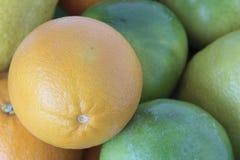 Zitrusfruchtaufstellung Lizenzfreie Stockfotos