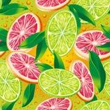 Zitrusfruchthintergrund Stockfotografie