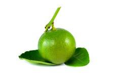 Zitrusfruchtkalk Lizenzfreie Stockfotografie