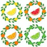 Zitrusfruchtkranzsatz Stockbild