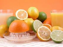 Zitrusfruchtquetscher Stockbilder